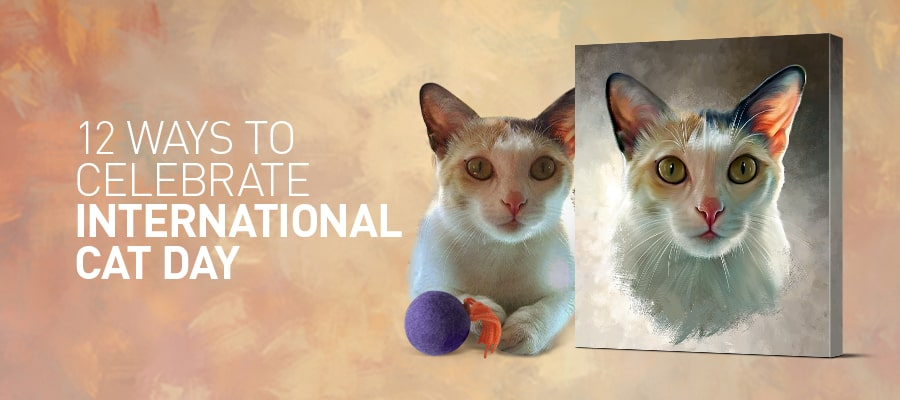 12 ways to make International Cat Day awesome! (#5 is a must know)